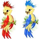 Papagaio de duas opções fotos de stock