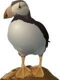 Papagaio-do-mar Ilustração do Vetor