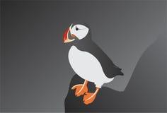 Papagaio-do-mar atlântico Fotos de Stock