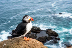 Papagaio-do-mar atlântico colorido Foto de Stock
