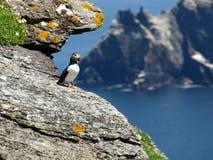 Papagaio-do-mar em uma parte superior do penhasco Fotos de Stock Royalty Free