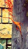 Papagaio do mar Horse foto de stock