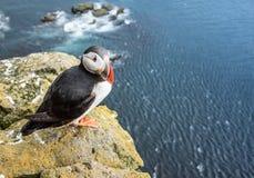 Papagaio-do-mar nos penhascos de Latrabjarg, fiordes ocidentais, Islândia imagem de stock