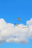 Papagaio do vôo foto de stock royalty free