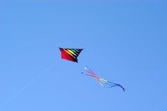 Papagaio do vôo   Fotografia de Stock