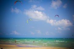 Papagaio dos povos que surfa perto da praia Fotografia de Stock