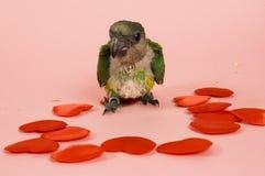 Papagaio e corações novos do bebê foto de stock