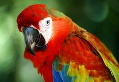Papagaio em Kuala Lumpur Bird Park Foto de Stock