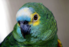 Papagaio em Kuala Lumput Bird Park Imagens de Stock Royalty Free