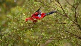 Papagaio em um ramo de árvore vídeos de arquivo