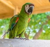 Papagaio em uma cerca Curacao Views fotos de stock