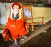 Papagaio em uma cerca Curacao Views fotos de stock royalty free