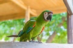 Papagaio em uma cerca Curacao Views imagem de stock
