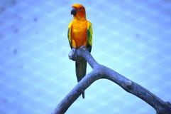 Papagaio em uma gaiola Fotos de Stock Royalty Free