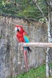 Papagaio encantado do parque do jardim Fotos de Stock