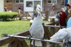 Papagaio feliz Fotos de Stock Royalty Free