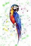 Papagaio grande amarelo da selva bonita bonito colorida brilhante e azul tropical em um illustrat colorido da mão da aquarela do  ilustração royalty free