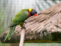 Papagaio, Kuala Lumpur Bird Park fotografia de stock