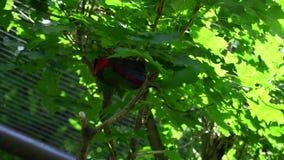 Papagaio na árvore filme
