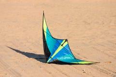 Papagaio na terra Imagem de Stock Royalty Free