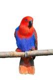 Papagaio no caminhão foto de stock royalty free