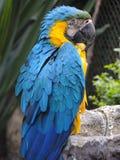 Papagaio no jardim zoológico. Imagens de Stock