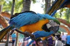 Papagaio no parque de Nong Nooch fotografia de stock