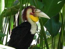 Papagaio no shadown de uma palmeira Fotos de Stock