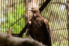 Papagaio preto do pássaro foto de stock royalty free