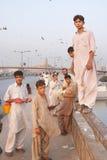 Papagaio que alimenta, Karachi, Paquistão Imagens de Stock Royalty Free