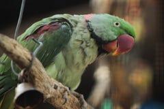Papagaio que senta-se na árvore Imagens de Stock Royalty Free
