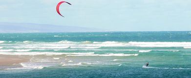 Papagaio que surfa fora da costa foto de stock royalty free