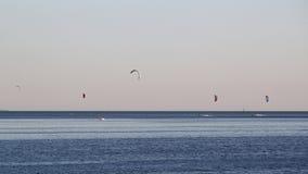 Papagaio que surfa no horizonte Fotografia de Stock