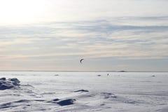Papagaio que surfa no inverno Imagens de Stock