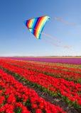 Papagaio que voa sobre tulipas vermelhas bonitas durante o dia Imagem de Stock Royalty Free