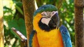 Papagaio selvagem filme
