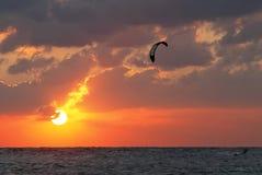 Papagaio-surfar Fotos de Stock Royalty Free