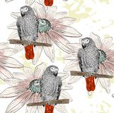 Papagaio Teste padrão sem emenda Fotografia de Stock Royalty Free