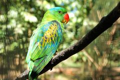 Papagaio verde em um jardim tropical Fotos de Stock Royalty Free