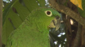 Papagaio verde em uma filial video estoque