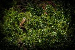 Papagaio vermelho imagens de stock royalty free