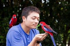 Papagaio vermelho na mão masculina Fotos de Stock Royalty Free