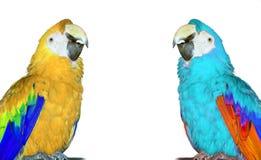 Papagaios Fotografia de Stock