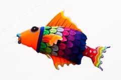 Papagaios coloridos Foto de Stock