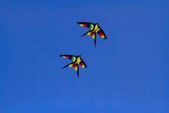 Papagaios coloridos Fotografia de Stock