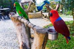 Papagaios coloridos dos pares Imagens de Stock Royalty Free