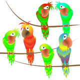 Papagaios coloridos encantadores Foto de Stock Royalty Free