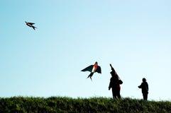 Papagaios da mosca da mãe e do filho Fotos de Stock