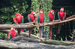 Papagaios do Macaw no jardim zoológico fotos de stock royalty free