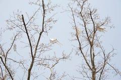 Papagaios do vôo Fotografia de Stock Royalty Free